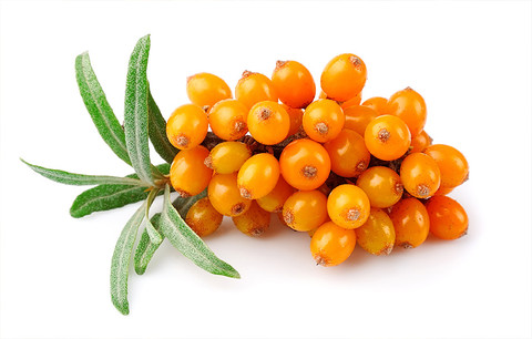 A S Harrison & Co Seabuckthorn